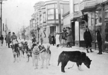 sled dog day