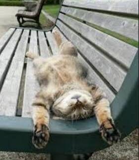 national public sleeping day