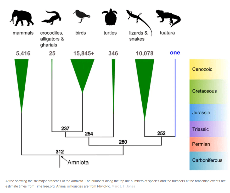 Tuatara Day evolutionary chart